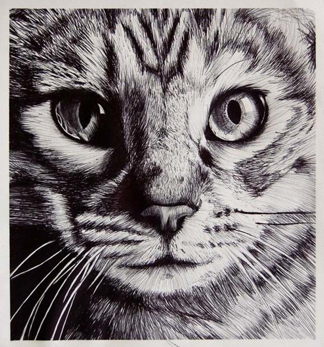 HD Cat