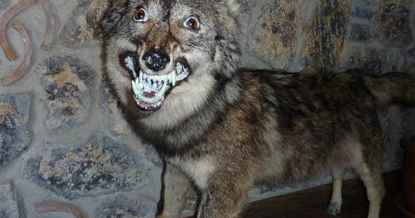 Viralands When Taxidermy Goes Wrong In Every Possible