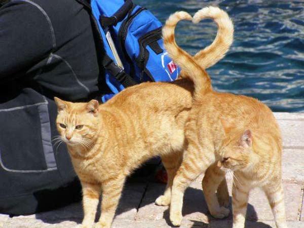 2 gatinhos que mostram o amor através de suas caudas