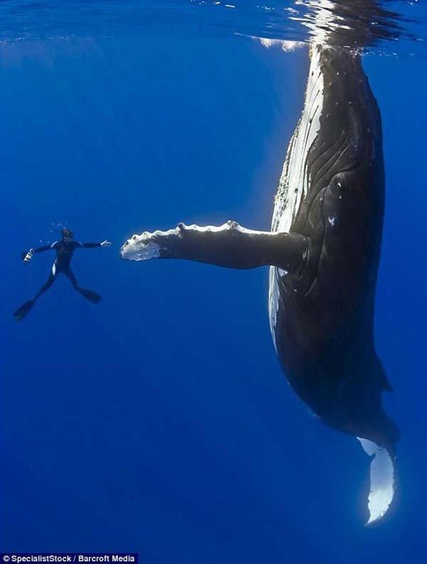 Dançando com um gigante gentil.