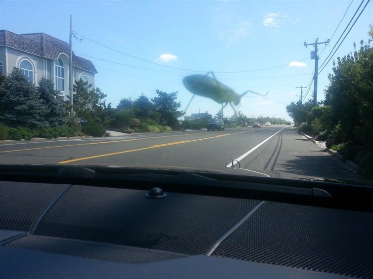 The giant grass hoppers are invading the city!