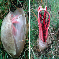 Would You Panic if You Found One of These Bizarre Egg Sacks in Your Backyard?